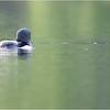 Adirondacks Lake Eaton 4 Loon June 2021