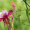 Adirondacks Chateaugay Lake Garden Flower 1 June 2021