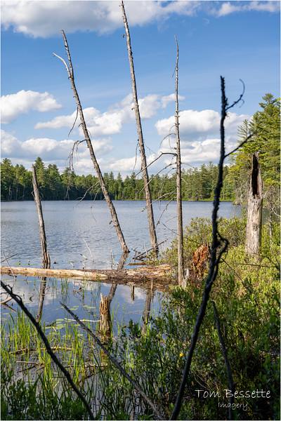Adirondacks Black Pond Saranac Wild Forest 1 June 2021