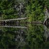 Adirondacks Rollins Pond Detail 3 July 2021