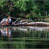 Adirondacks Whey Pond Common Mergansers 2 July 2021