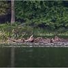 Adirondacks Piercefield Flow Eagle 1 July 2021