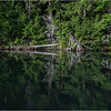 Adirondacks Rollins Pond Detail 2 July 2021