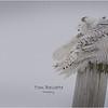 New York Madison County Snowy Owl Female 4 February 2021