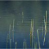 Adirondacks Simond Pond Detail 11 July 2021