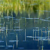 Adirondacks Simond Pond Detail 10 July 2021