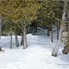 Adirondacks Essex County Owens Pond Snowshoe 12 February 2021