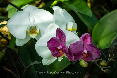 Hot House Orchids