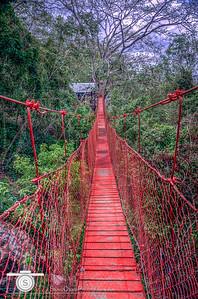 A Bridge in the Trees