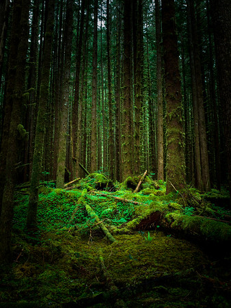 Lost In The Hoh Rain Forest - Olympic National Park