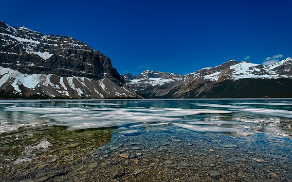 Ice On Bow Lake, Icefields Parkway