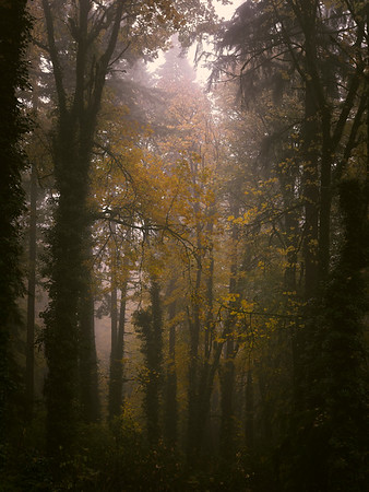 Splash Of Yellow In The Morning Fog - Portland, Oregon