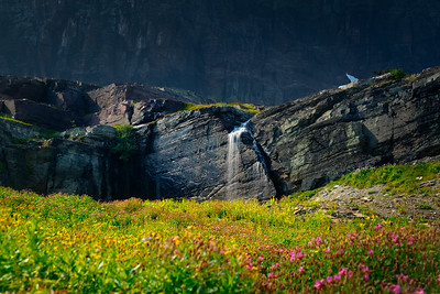 Waterfall & Wildflowers At Logan Pass