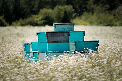 Bee Hives In A Field