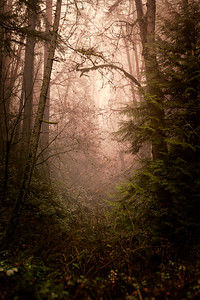 Fog In The Forest - Portland, Oregon