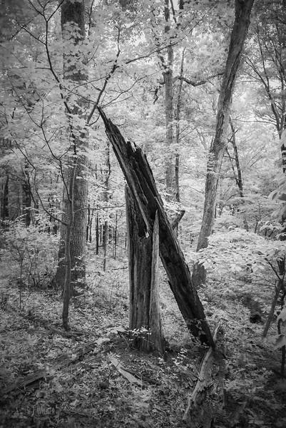 Castlewood State Park 0054, 06/12/2019