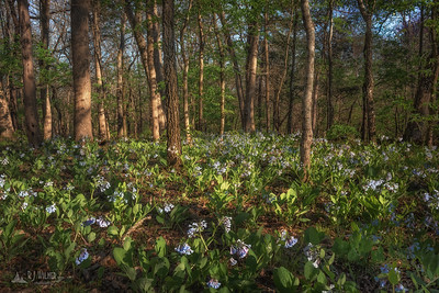 St. Francois State Park 0001, 04/15/2019