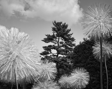 MO Botanical Garden 0110, 08/16/2015