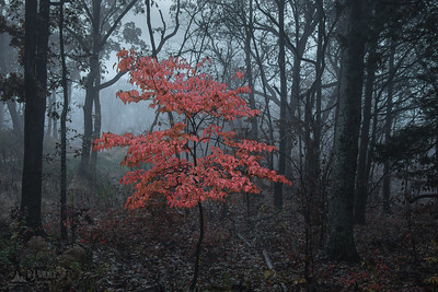 Don Robinson State Park 0044, 11/02/2018