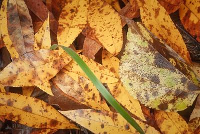 Tishomoak 006, 10/14/2009