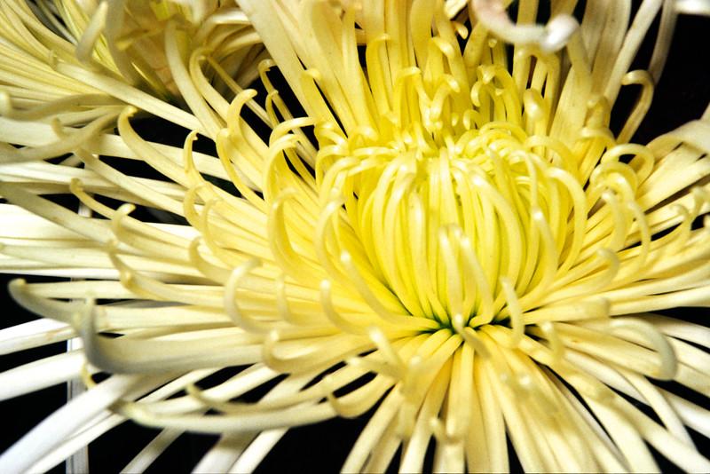 20050402-flower_4