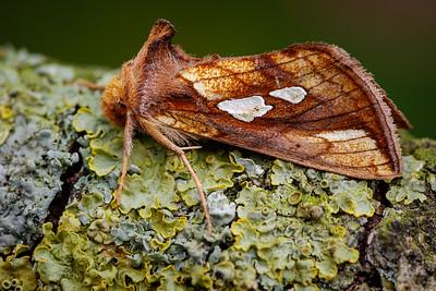 Garden Moths project