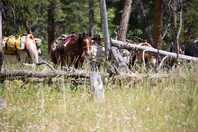 Horsepacking into the Absaroka-Beartooth Wilderness in Montana / Wyoming with Absaroka Beartooth Outfitters.  July 2016.