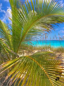 Tropical Escape, Compass Cay Bahamas