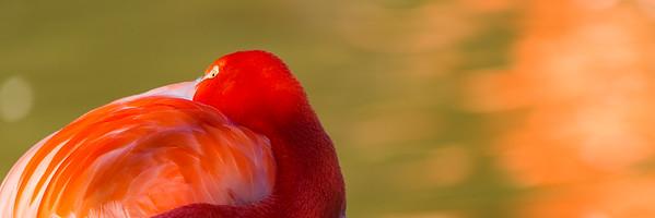 Vivid Flamingo