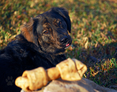Darby With Bone
