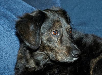 Darby's Portrait No. 3