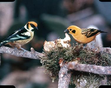 Bloedel Conservatory, Tropical Birds