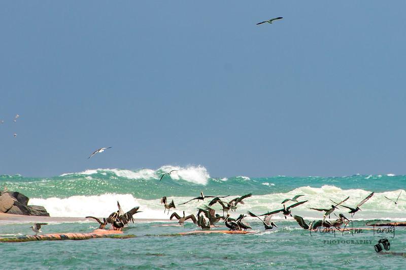 Pelican Landing II