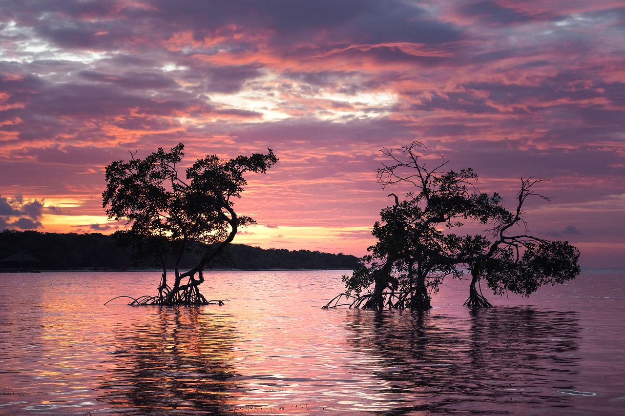 Roatan Mangroves Sunset