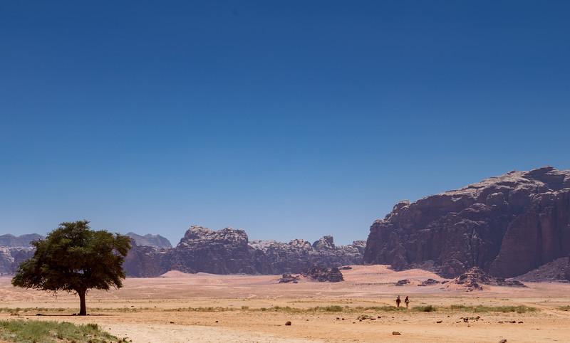 Wadi Rum Camel Riders