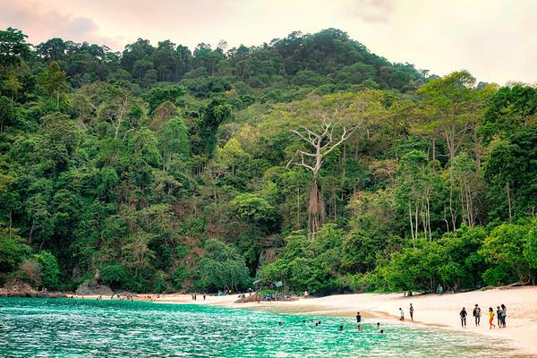 Green Bay Beach Icon and Jungle