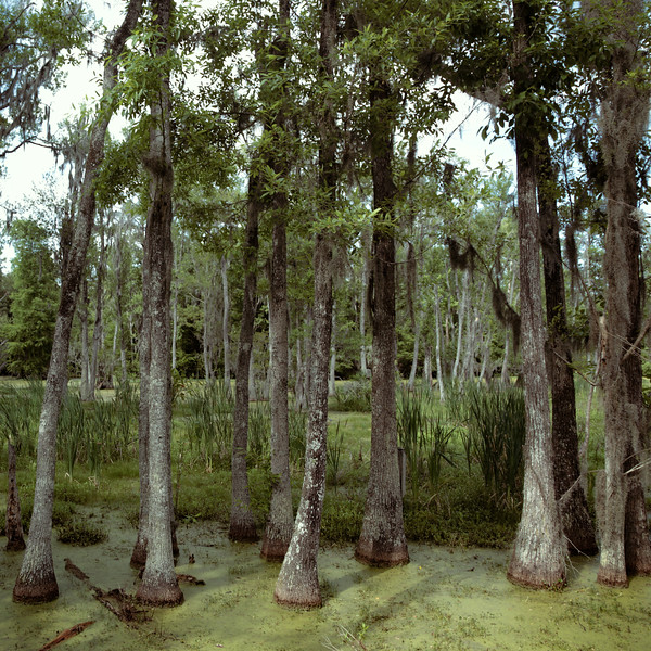 Magnolia Plantation Reserve LN201608