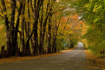 Old Carp Road In Autumn