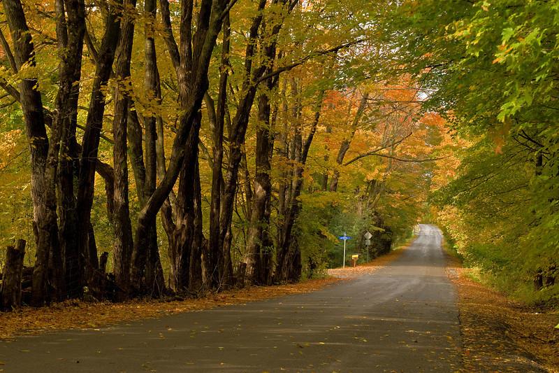 Old Carp Road In Autumn