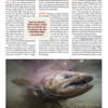 Photography tips and image.<br /> <br /> TROUT magazine, Spring 2017.