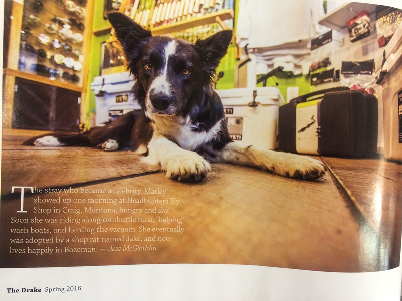 Marley the dog, and her story.<br /> <br /> The Drake magazine, April 2016.