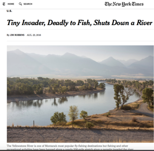 Assignment for The New York Times.  Yellowstone River, Montana.