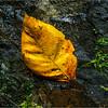 Puerto Rico February 2016 El Yunque Juan Diego Falls Leaf