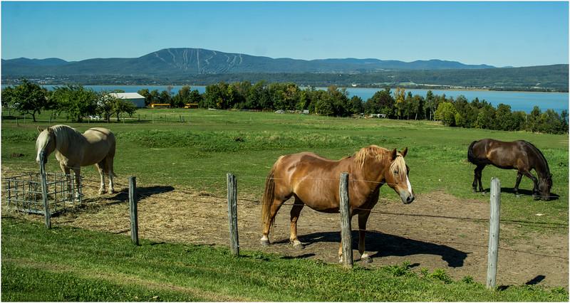 Canada Isle D'Orleans St Laurent Horses