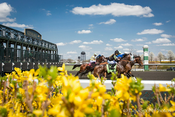 The start of a 7 furlong race at keeneland on 4.12.2014