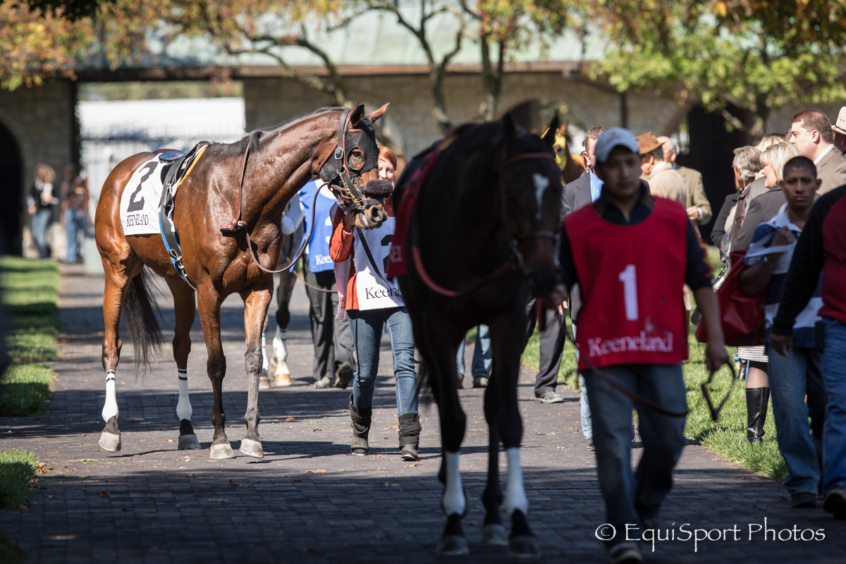 Horse in the Keeneland saddling paddock before their race.