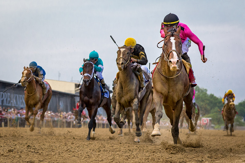 War of Will (War Front) wins the Preakness Stakes at Pimlico on 5.18.2019. Tyler Gaffalione up, Mark Casse trainer, Gary Barber owner.