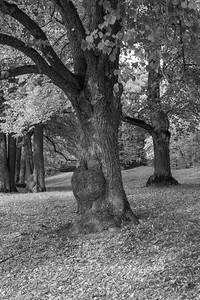 Tyresö slottspark
