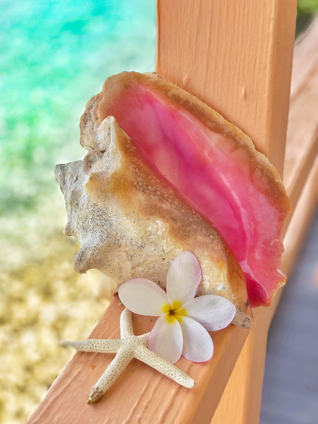 Conch Shell Beauty