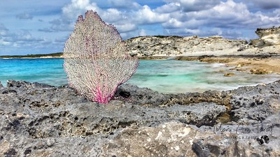 Sea Fan Landscape
